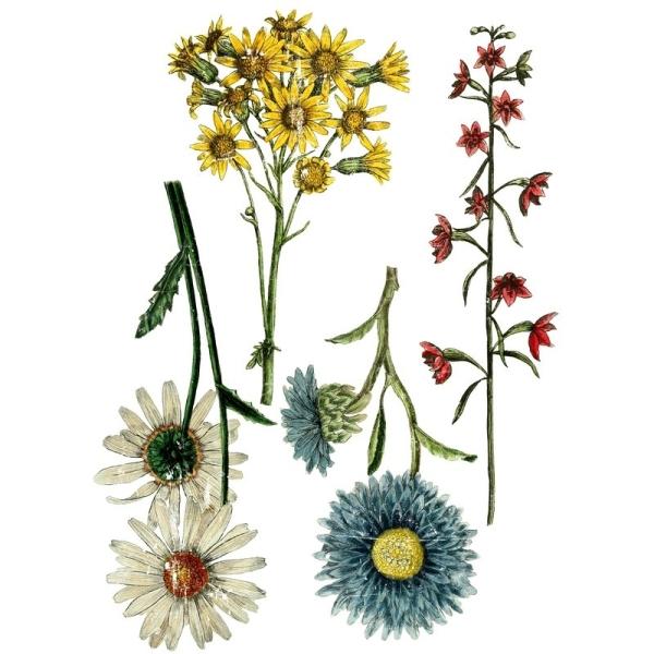 Transferfolie Wild Flower Botanicals Shabby World
